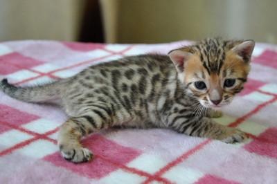 20131023_kittens151