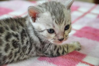 20131023_kittens167