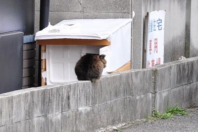 20131118_cat001