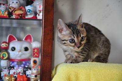 20131203_kittens065