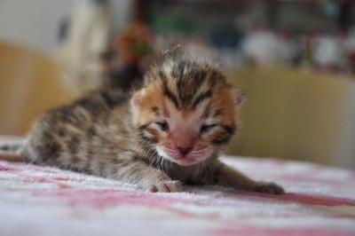20131205_kittens005