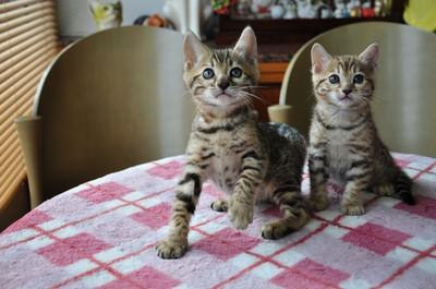 20140114_kittens031