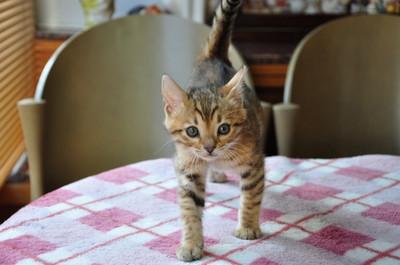 20140123_kittens004