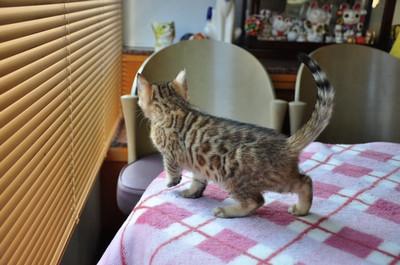 20140123_kittens006