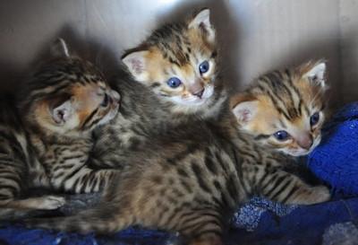 20140327_kittenss008