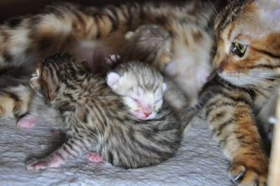 20140401_kittens004