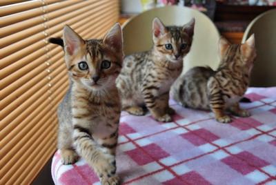 20140508_kittens014