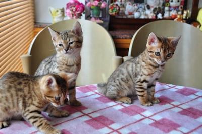20140508_kittens017
