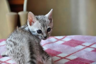 20140508_kittens079