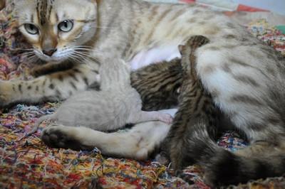 20140605_kitten001
