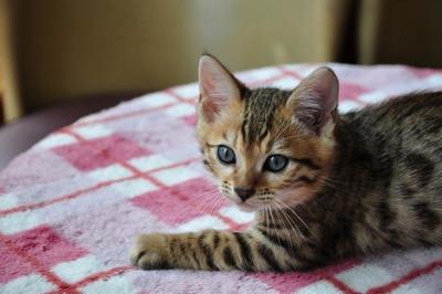 20140622_kittens069