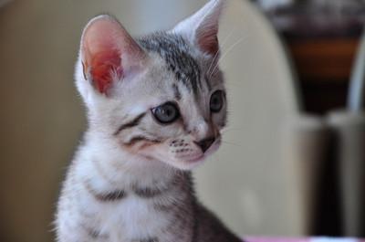 20140629_kittens009