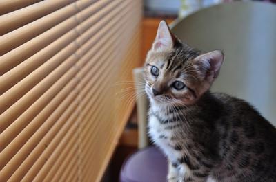 20140629_kittens017