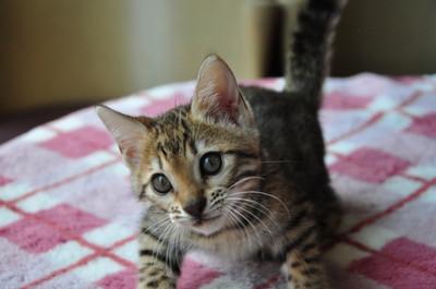 20140629_kittens024