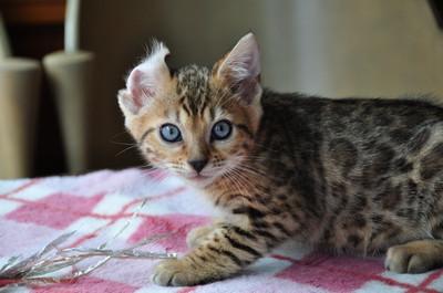 20140629_kittens035