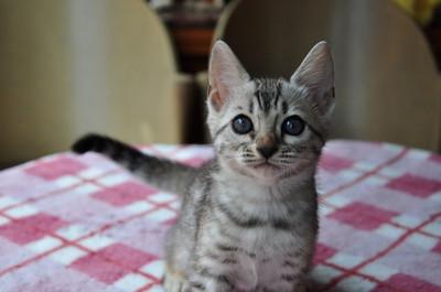 20140629_kittens048