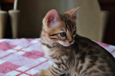20140629_kittens052