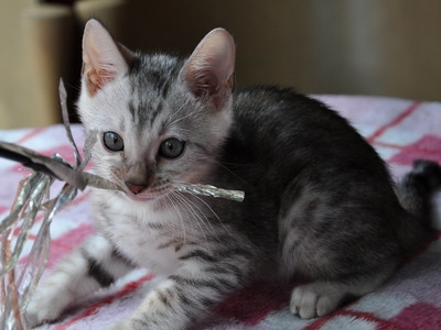 20140629_kittens066