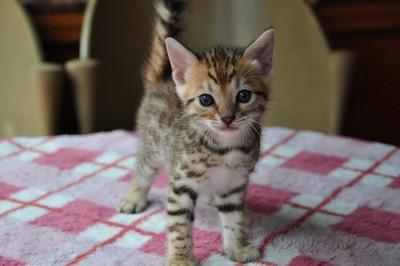 20140629_kittens077