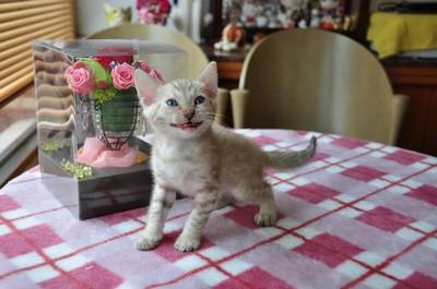 20140711_kittens027