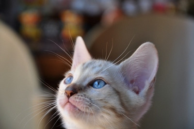 20140725_kittens025