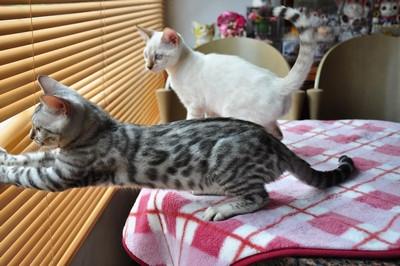 20140813_kittens1002