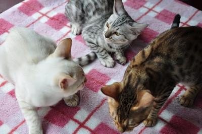 20140813_kittens1004