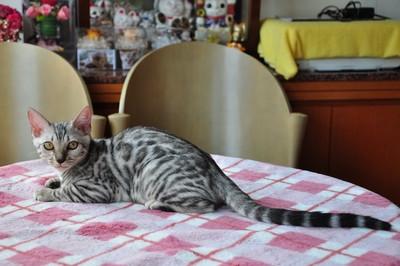 20140813_kittens1008