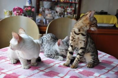20140813_kittens2001