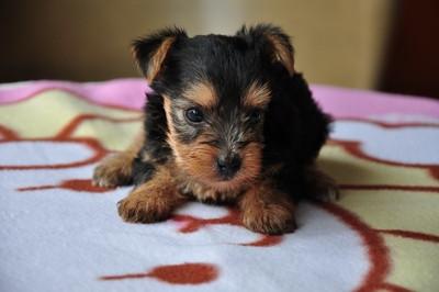 20140820_puppy004