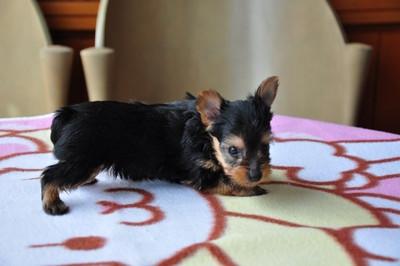 20140820_puppy006