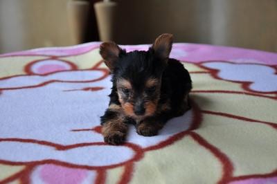20140820_puppy007