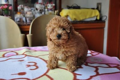 20140820_puppy008