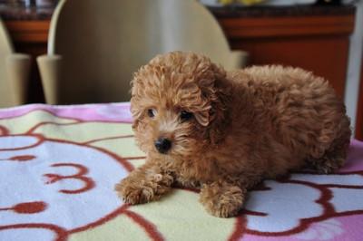 20140820_puppy011
