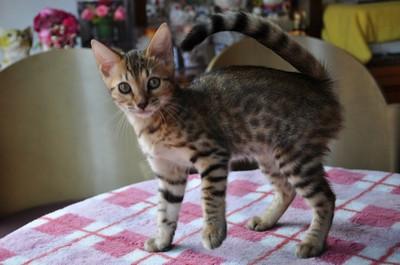 20140818_kittens015