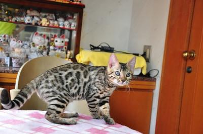 20140822_kittens082