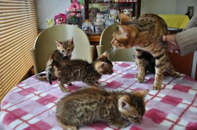 20150106_kittens001