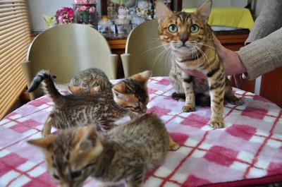 20150106_kittens002