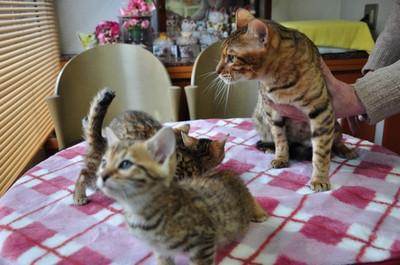 20150106_kittens003