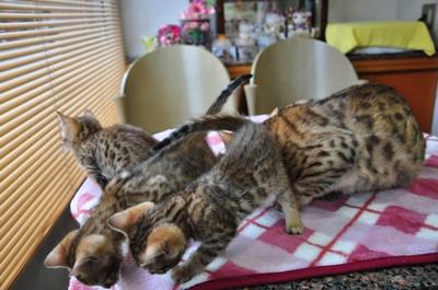 20150106_kittens004