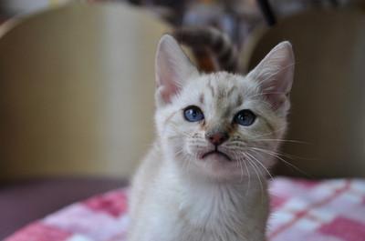20150226_kittens026