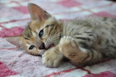 20150529_kittens089