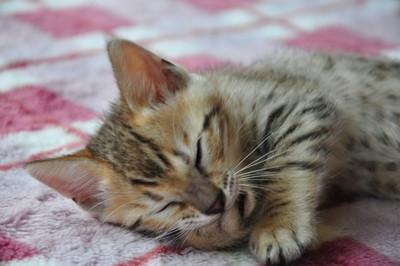 20150529_kittens092