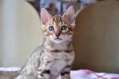 20150612_kittens053