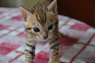 20150817_kittens065