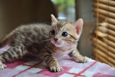 20150817_kittens074