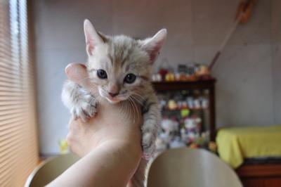 20150817_kittens091