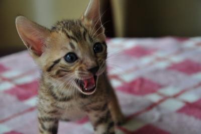 20150817_kittens130