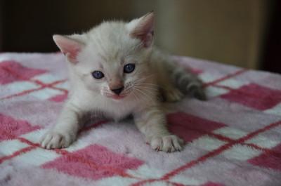 20150817_kittens153