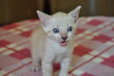 20150817_kittens162